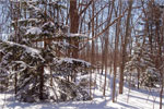 The trees along the nature trail are covered in snow and have interesting shadows in the sun